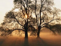 #love, #walkaway, #beautiful, #hope, William Griffin Brooks, Kathryn Brooks, Griffin Brooks, Johnathan McCravy, Sandy McCravy, Sandi McCravy, Sandra Brooks McCravy, Derek McCravy, Greg McCravy, Tree